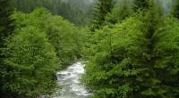 Fin 2011, L'Agence Française de Développement (AFD) accordait à la Turquie un prêt souverain de 150 millions d'euros, afin de renforcer son programme de préservation des forêts, en particulier de […]