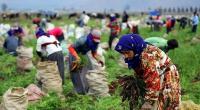 Hier, lundi 6 juillet, un poids-lourd d'immatriculation turque transportant des ouvriers agricoles a percuté une citerne à lait dans la région Égéenne de Manisa, faisant 15 morts et deux blessés. […]