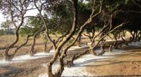 Septembre. La rentrée est bien entamée. Évadons-nous encore un instant sur les routes de Chios, à la découverte du mastic et de ses autres pépites insoupçonnables. On atteint Chios, Sakız […]