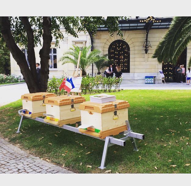 ruches_palais_de_france