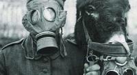 Le lycée français Notre-Dame de Sion, en partenariat avec le Consulat général de Belgique, organise une exposition photographique consacrée à la Première Guerre mondiale du 19 octobre au 3 novembre. […]