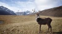 Lundi 25 juillet, l'État d'urgence a été déclaré par le gouverneur de la péninsule de Yamal en Sibérie. Du fait des températures anormalement élevées, une épidémie d'anthrax a entrainé la […]