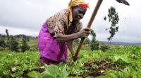 L'évènement organisé par le ministère de l'Alimentation, de l'Agriculture et de l'Élevage accueillera plus de 300 participants, dont des ministres de l'Agriculture de pays africains, des ambassadeurs, mais aussi des […]
