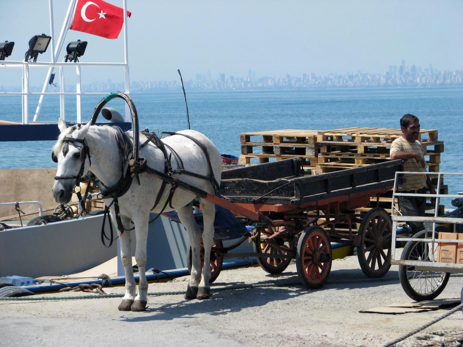 plus de 400 chevaux utilis s pour les cal ches meurent chaque ann e istanbul aujourd 39 hui la. Black Bedroom Furniture Sets. Home Design Ideas