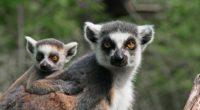 Le mois de mai a été chargé au zoo de Gaziantep. La famille du parc animalier s'est agrandie au plus grand bonheur de tous.