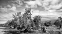 En mai dernier, une exposition photographique a permis d'illustrer avec beaucoup de grâce et de pertinence l'implication des professeures et élèves des lycées français Notre-Dame de Sion et Saint-Michel en […]