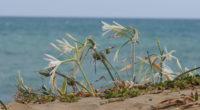Afin de protéger la flore endémique de la côte méditerranéenne turque, les personnes qui auront la mauvaise idée de cueillir des jonquilles de mer pour agrémenter leur intérieur seront condamnées […]