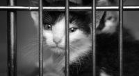 Alors que la cruauté animale fait scandale en Turquie, la police turque a mis en place une nouvelle division en son sein afin de traquer les auteurs de cruauté envers […]
