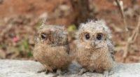 Le centre turc de protection de la vie sauvage de Gölpinar, situé dans la province de Şanlıurfa, soigne et remet en liberté les oiseaux de la région depuis cinq ans. […]