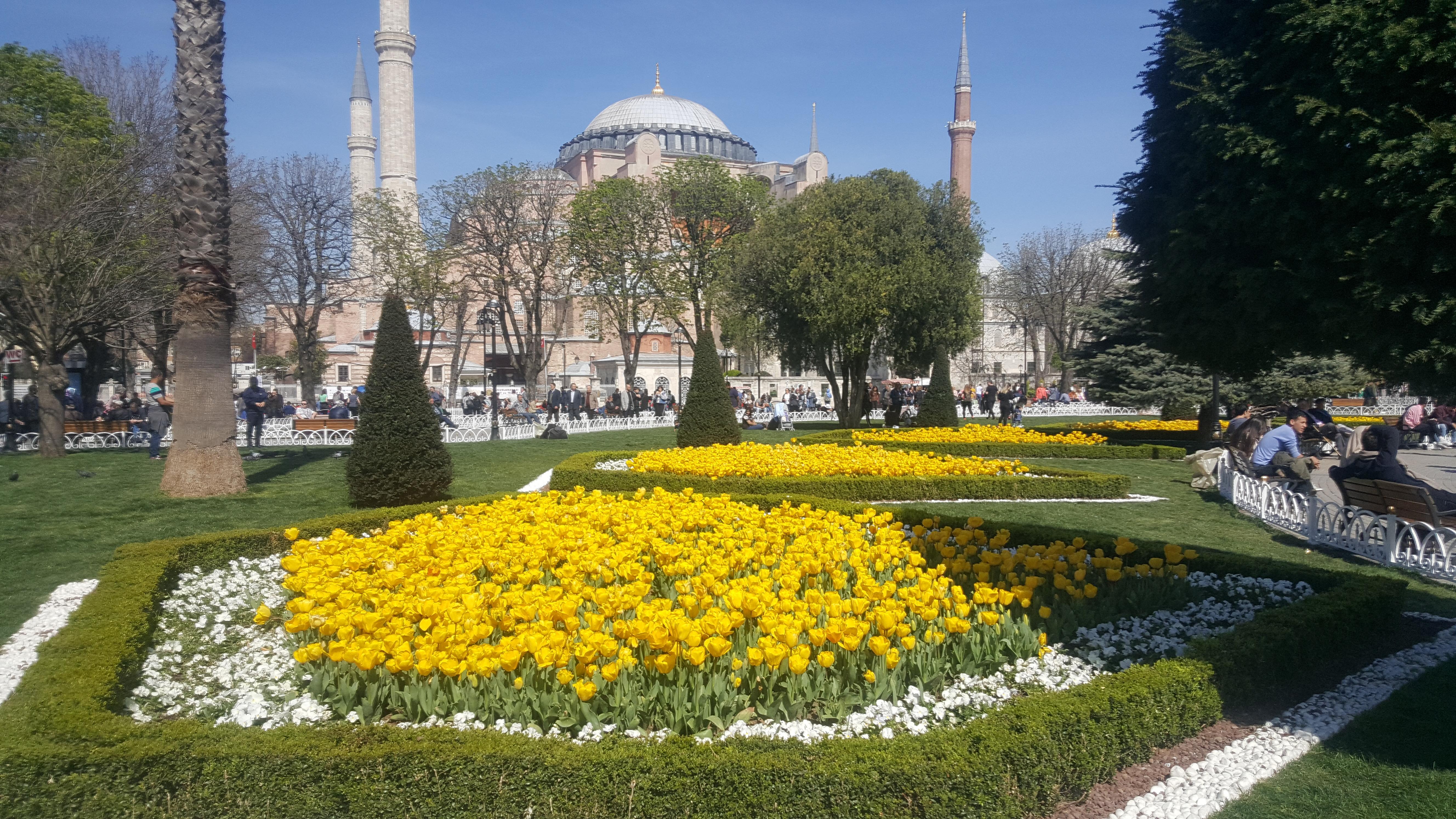 les tulipes prennent leurs quartiers istanbul aujourd 39 hui la turquieaujourd 39 hui la turquie. Black Bedroom Furniture Sets. Home Design Ideas
