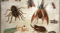 60000. C'est le nombre d'insectes exposés dans le nouveau musée de la capitale turque, selon le Hürriyet Daily News.