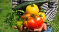 Une question légitime nous vient souvent à l'esprit: «Puisque la cuisson détruit certains principes nutritifs, ne devrions-nous pas manger les aliments crus?» C'est vrai, ce qui peut se manger cru […]