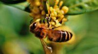 La Turquie est le deuxième plus grand pays apicole du monde après la Chine, a déclaré le président de l'Association des apiculteurs d'Ankara à l'occasion de la journée mondiale des […]