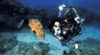 Afin de mettre en avant la biodiversité exceptionnelle des mers turques, la Fondation turque pour la recherche marine (TÜDAV) propose une exposition de photographies au siège des Nations unies, à […]