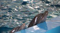 Une commission parlementaire a signé un rapport proposant d'interdire les cirques d'animaux et les delphinariums dans tout le pays. Ce rapport s'inscrit dans un contexte particulier. En effet, de plus […]