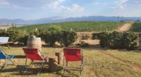 *L'actuelle ville touristique d'Antalya était jadis appelée Wiyanawanda (Oinoanda) par les Hittites,ce qui voulait dire «la Cité du Vin». Pourriez-vous nous parler de l'histoire de votre vignoble et des vins […]