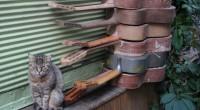 La municipalité de Samsun, au nord de la Turquie, a ouvert il y a peu une «ville pour les chats». L'attachement des Turcs pour les petits félins n'est plus à […]