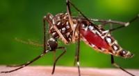 Depuis janvier, l'épidémie du virus Zika inquiète la communauté internationale. Les médias s'emparent de l'événement, et la frénésie du feuilleton épidémique reprend son cours. Chaque année, une nouvelle épidémie concentre […]