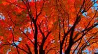 Chaque année se répètent les notes de la célèbre chanson de Joe Dassin: «C'était l'automne, un automne où il faisait beau. Une saison qui n'existe que dans le nord de […]