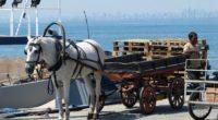 Les associations de défense des animaux tirent la sonnette d'alarme contre les calèches tirées par les chevaux. Chaque année, plus de 400 chevaux succombent de leurs blessures et des mauvaises […]