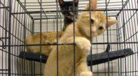 Une nouvelle loi devrait voir le jour en Turquie, interdisant la vente de chats et de chiens en animalerie.