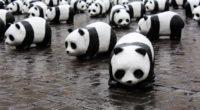 Dans le cadre de sa campagne d'adoption, le bureau du Fonds mondial pour la nature (WWF) en Turquie a appelé les Turcs à «adopter un animal» le 14 février, soit […]