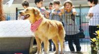 La municipalité d'Ortahisa, en partenariat avec le ministère de l'Éducation nationale et l'Organisation pour le bien-être animal (TRAHAYKO), ont lancé le projet «Ortahisar Love Vaccine» (Vaccin d'amour Ortahisar).